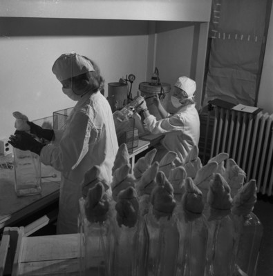 Lab technicians at Connaught harvest a virus to be used in producing a Salk vaccine, courtesy of Library and Archives Canada (CNW Group/Public Health Agency of Canada)
