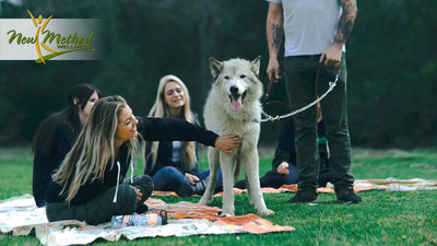 Wolf Therapy at New Method Wellness